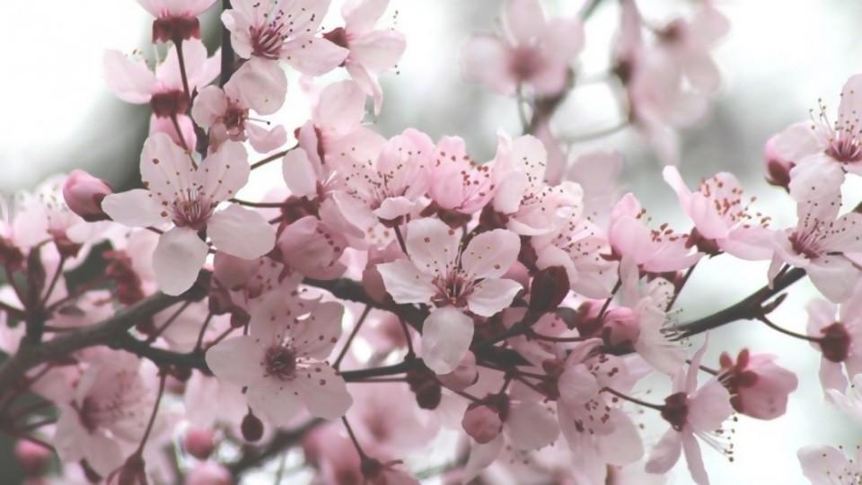 Catálogo de árboles extraños —  Segmento dispositivo — La Venganza sera terrible | El Espectador 810