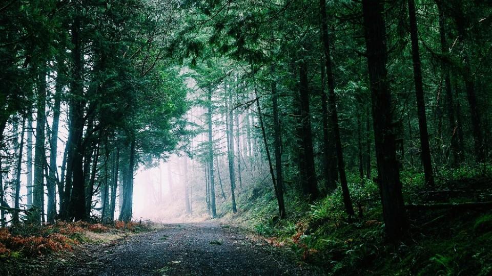 Los beneficios de los paseos y de los sábados de mañana —  Ines Bortagaray — No Toquen Nada   El Espectador 810