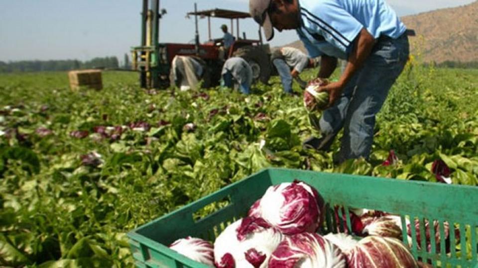 El déficit hídrico golpea y compromete la producción hortifruticola  —  Granja — Dinámica Rural | El Espectador 810