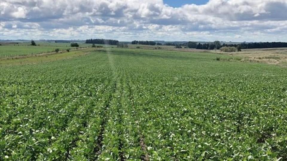 Zona núcleo: La soja podría marcar rindes de entre 2.300 y 2.500 kgs por hás, y será una zafra con disparidad de rendimientos, según ADP —  Agricultura — Dinámica Rural | El Espectador 810