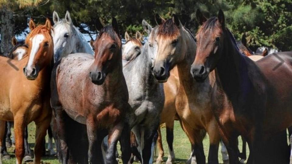 Hoy finaliza la venta de Cabaña 'San Antonio' —  Ganadería — Dinámica Rural | El Espectador 810