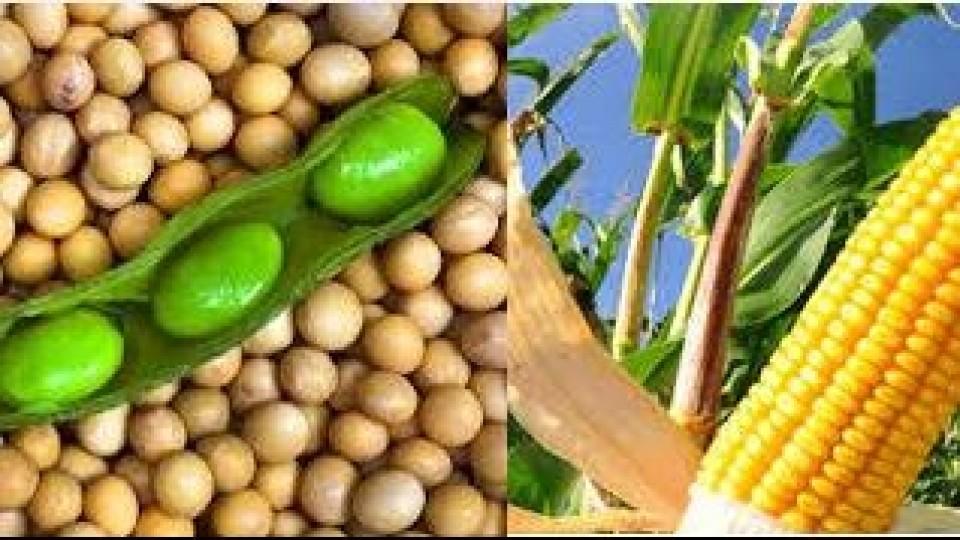 Chicago: El mercado de granos abrió al alza, mientras se espera un nuevo reporte del USDA —  Agricultura — Dinámica Rural | El Espectador 810