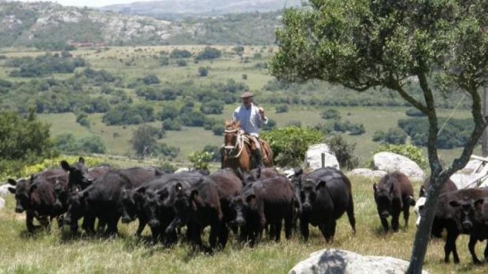 Las lluvias favorecieron a la ganadería, pero 'hay que prestar atención a la garrapata' —  Ganadería — Dinámica Rural | El Espectador 810