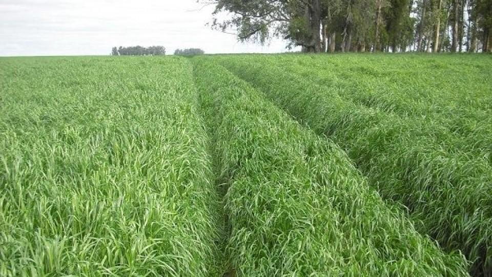 La Feria de Prolesa propone nuevas tecnologías en semillas, tanto para invierno como para verano —  Lechería — Dinámica Rural   El Espectador 810