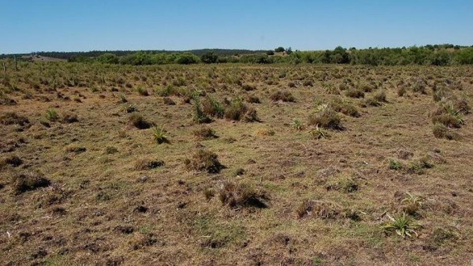 MGAP extendió plazo para inscribirse en la Emergencia Agropecuaria —  Economía — Dinámica Rural | El Espectador 810