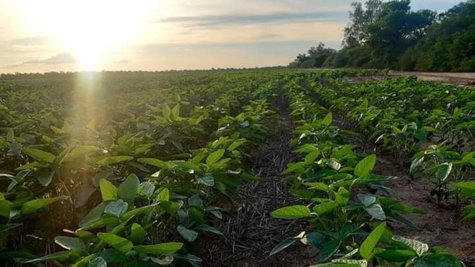 'Paraguay sigue siendo un lugar de oportunidades para uruguayos' —  Agricultura — Dinámica Rural | El Espectador 810