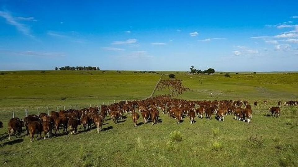 'Mientras el clima acompañe, el mercado seguirá fluido' —  Ganadería — Dinámica Rural | El Espectador 810