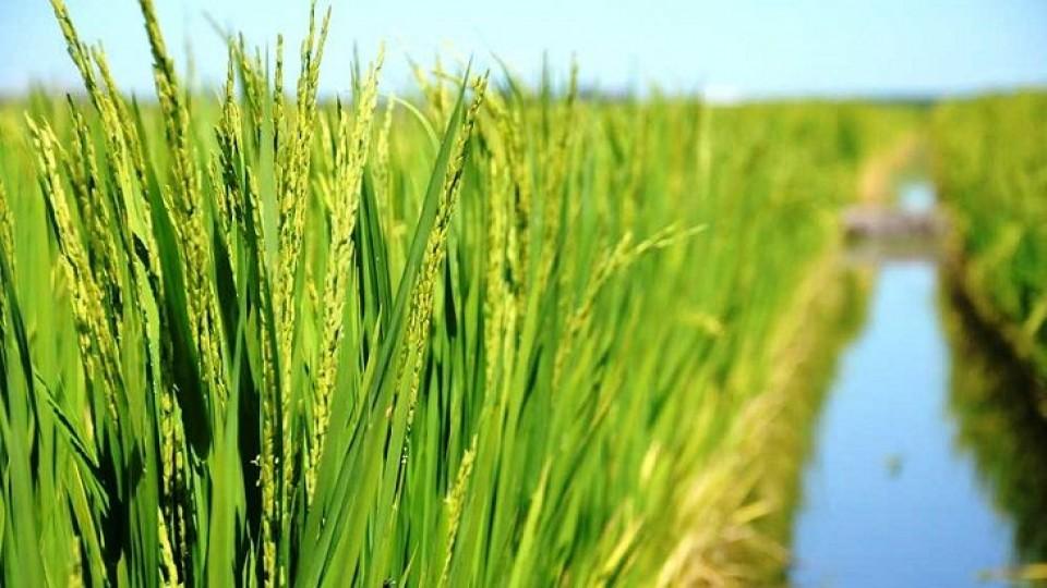 Sin acuerdo —  Agricultura — Dinámica Rural   El Espectador 810