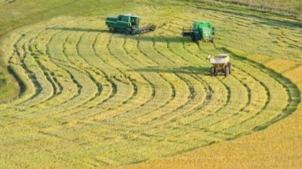 Arroz: El precio provisorio para el cereal quedó en 9.85 dólares por bolsa de 50kgs, más 15 centavos a cuenta de negocios de exportación —  Agricultura — Dinámica Rural | El Espectador 810