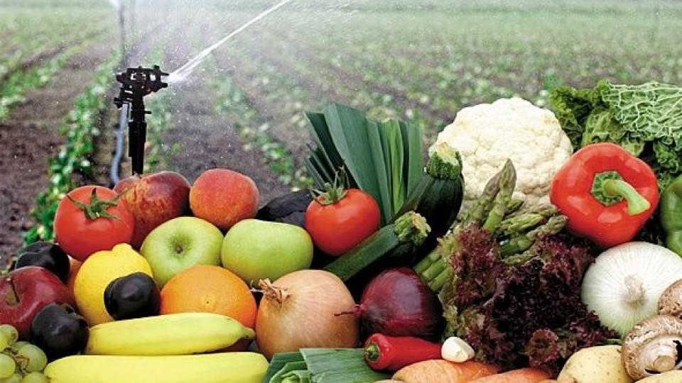 Mejoramiento genético, una herramienta para mejorar la producción de frutas y hortalizas —  Granja — Dinámica Rural | El Espectador 810