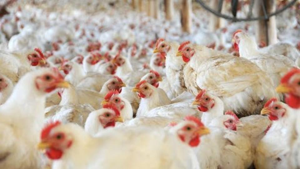 Objetivo: El rubro avícola va en la línea de fortalecer 'todos los eslabones' —  Granja — Dinámica Rural   El Espectador 810