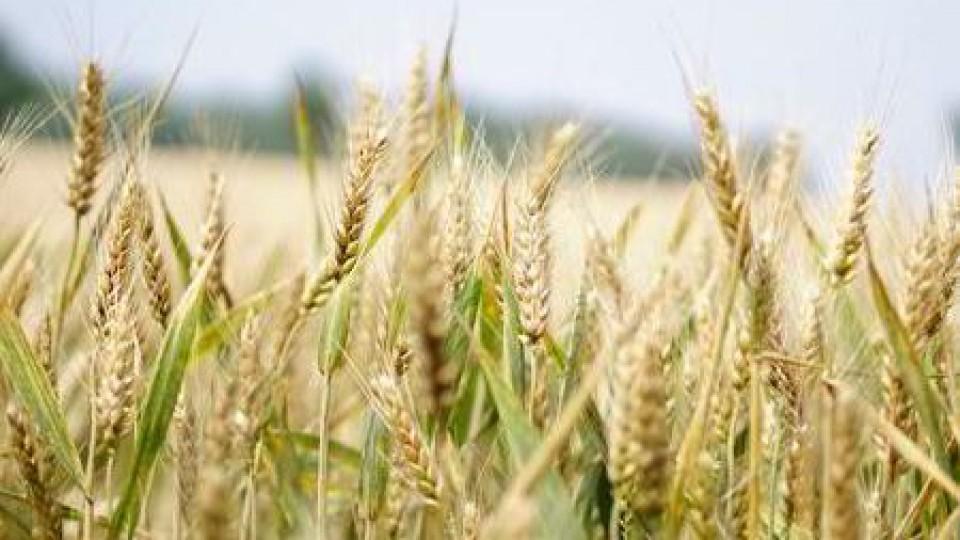 Agricultura: Con casi el 100% del área de invierno implantada, ya se planifica la campaña de verano —  Agricultura — Dinámica Rural   El Espectador 810