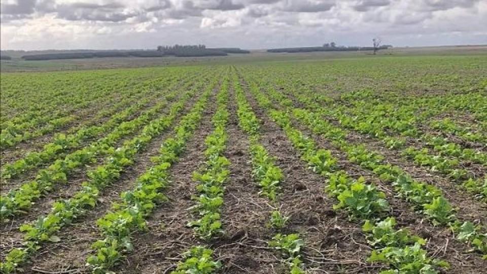 ADP sembró el 85% del área de invierno y logra buenos rendimientos en maíz   —  Agricultura — Dinámica Rural   El Espectador 810