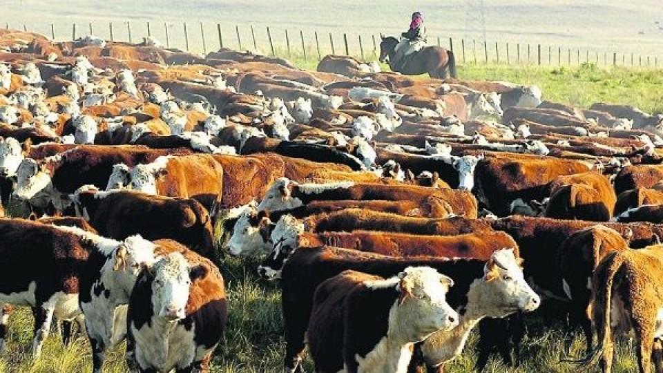 Muu 'es una alternativa rápida y con respaldo' —  Mercados — Dinámica Rural | El Espectador 810