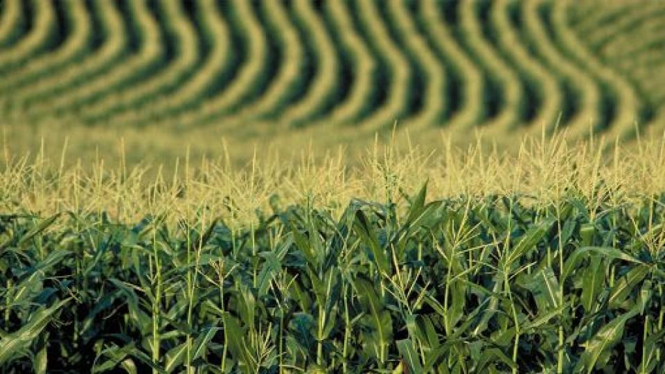 El mercado de granos, bajo los efectos de la guerra comercial entre China y EEUU —  Economía — Dinámica Rural | El Espectador 810