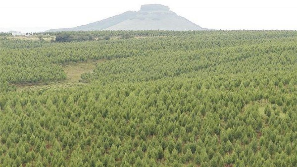 INIA organiza seminario sobre genética forestal —  Inversión — Dinámica Rural   El Espectador 810