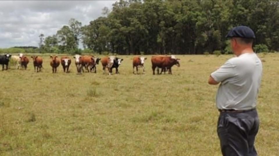 Ganadería: El Plan Agropecuario promueve 'Productor Asociado' —  Ganadería — Dinámica Rural   El Espectador 810