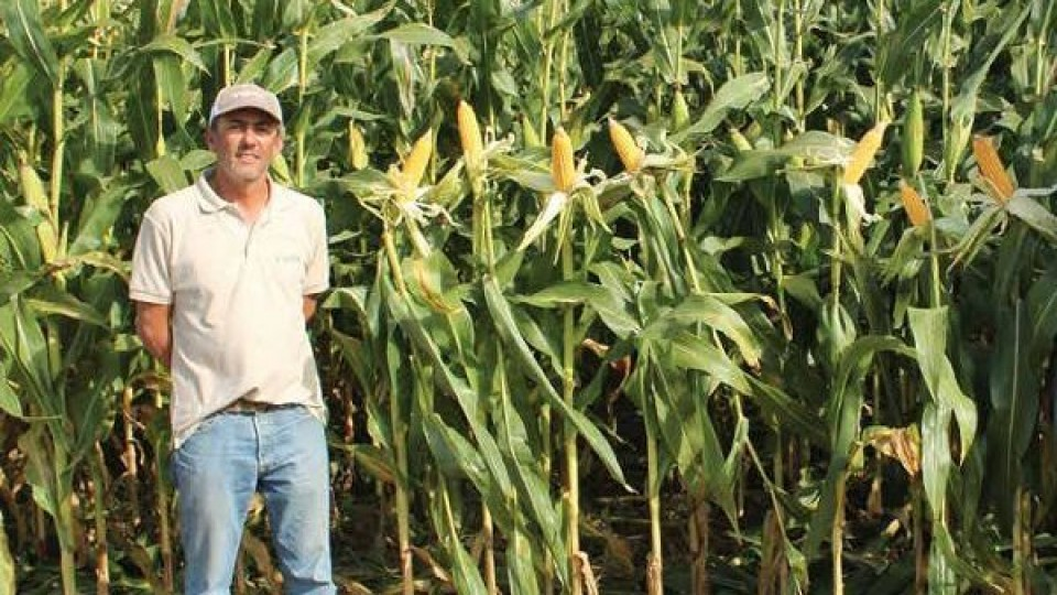 Yalfín promuve cartilla de maíz 'innovadora y validada' —  Agricultura — Dinámica Rural | El Espectador 810
