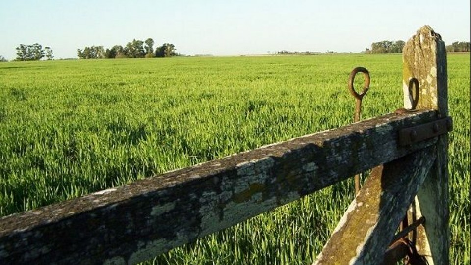 Arrendamientos: Datos de DIEA reflejan la pujanza del sector agropecuario —  Inversión — Dinámica Rural | El Espectador 810