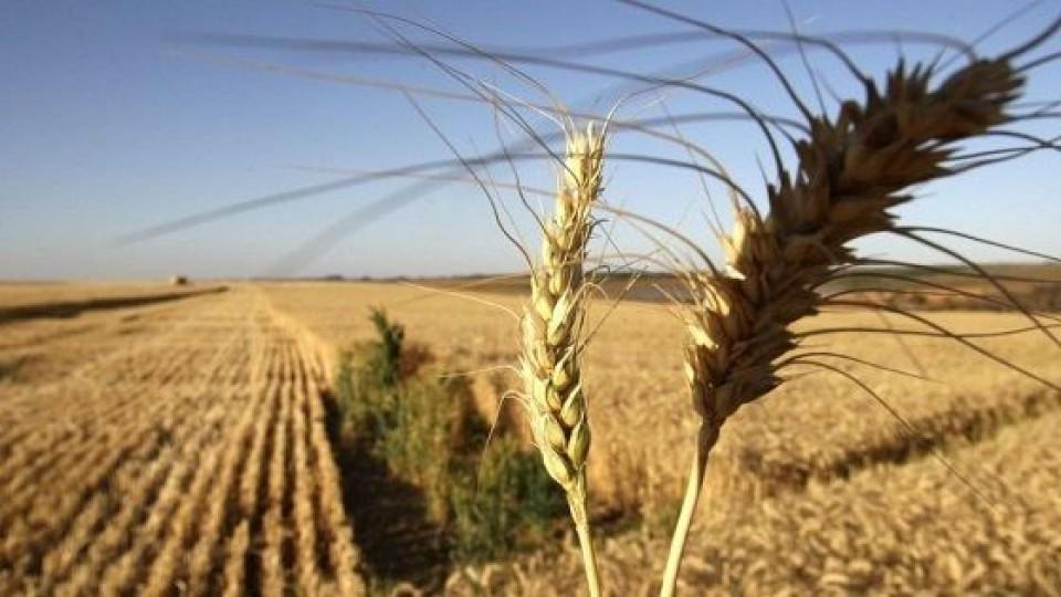 Cultivos de invierno: Hasta el momento hay buenas expectativas, aunque 'es temprano para estimar rindes' —  Agricultura — Dinámica Rural | El Espectador 810