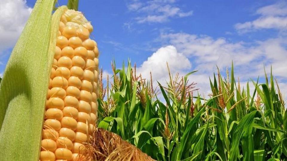 Prolesa promueve portfolio 'asegurado' en cultivos de verano —  Lechería — Dinámica Rural | El Espectador 810