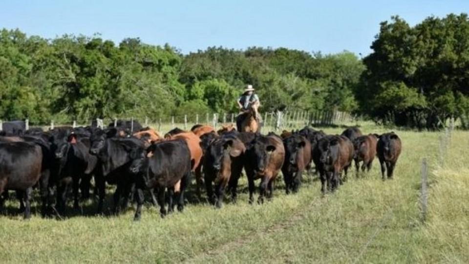 Pagés Mañay vende 1.000 vacunos en la Rural de Dolores  —  Ganadería — Dinámica Rural | El Espectador 810