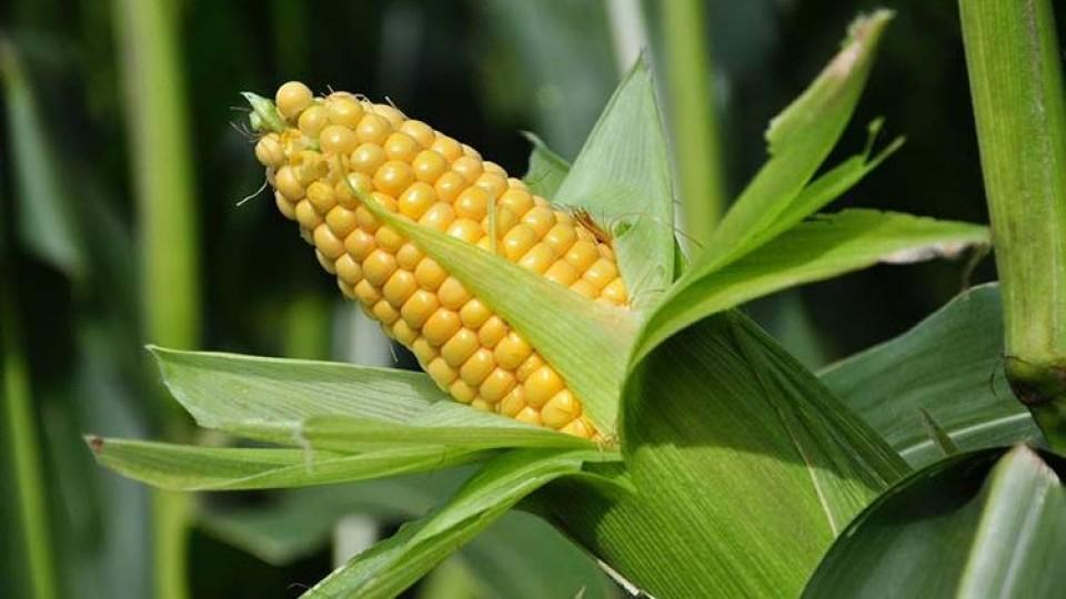 Cultivos de verano: Decisiones estratégicas en el uso de herbicidas —  Agricultura — Dinámica Rural | El Espectador 810