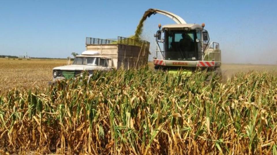 Prolesa destaca 'Plan para ensilaje' —  Lechería — Dinámica Rural   El Espectador 810