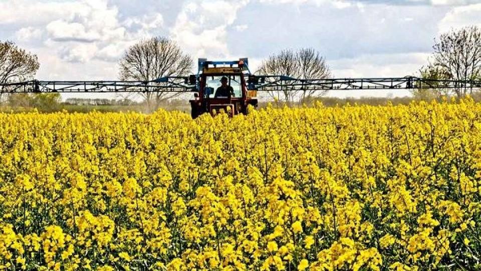 Colza: Crece en área, pero también los controles —  Agricultura — Dinámica Rural | El Espectador 810