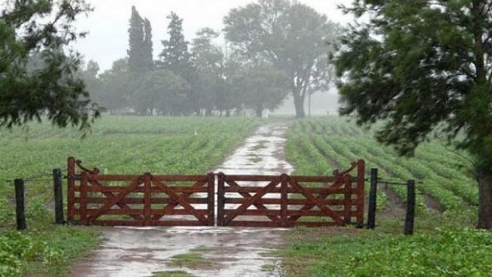 M. Bidegain: 'Las lluvias ocurrieron en el momento justo' —  Clima — Dinámica Rural | El Espectador 810