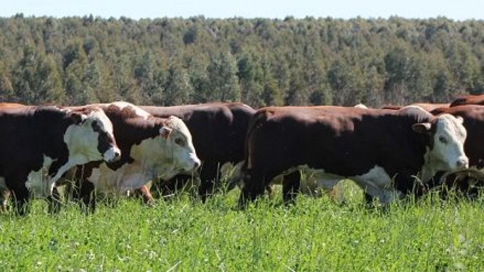 'El Telégrafo' vende su genética 100% online —  Mercados — Dinámica Rural   El Espectador 810