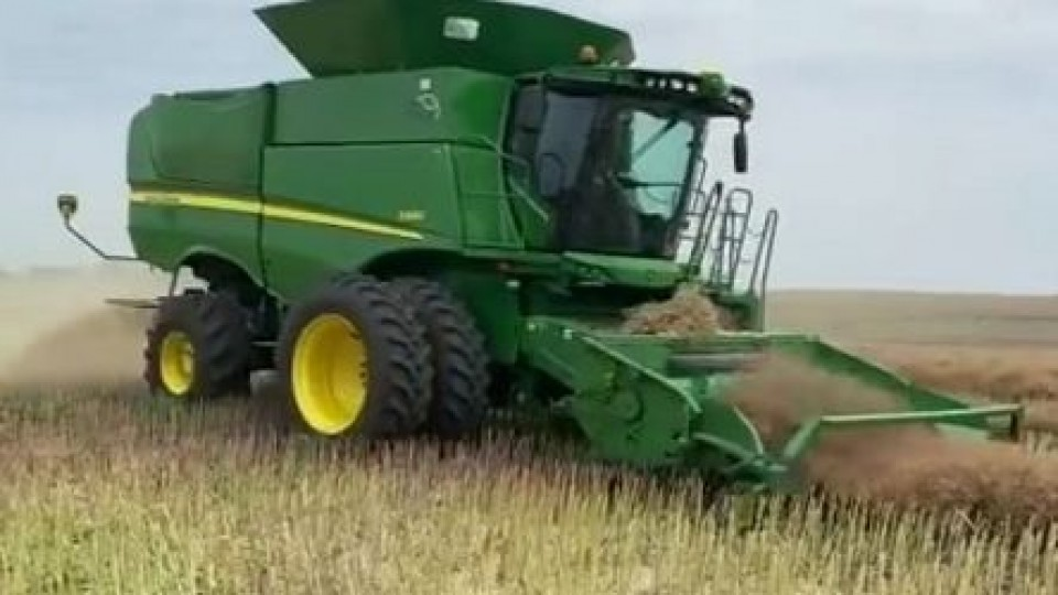 Comenzó la cosecha de colza, mientras que se sembró el 100% del área de maíz —  Agricultura — Dinámica Rural   El Espectador 810