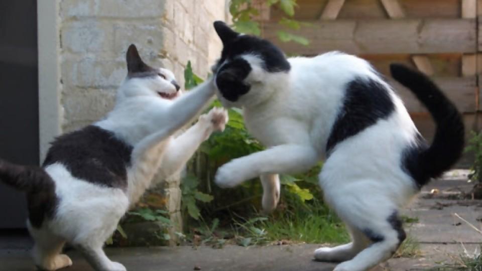 Los gatos traen problemas —  De qué te reís: Diego Bello — Más Temprano Que Tarde   El Espectador 810