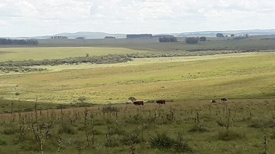 Clima: Noviembre ''viene con lluvias escasas'' —  Clima — Dinámica Rural | El Espectador 810