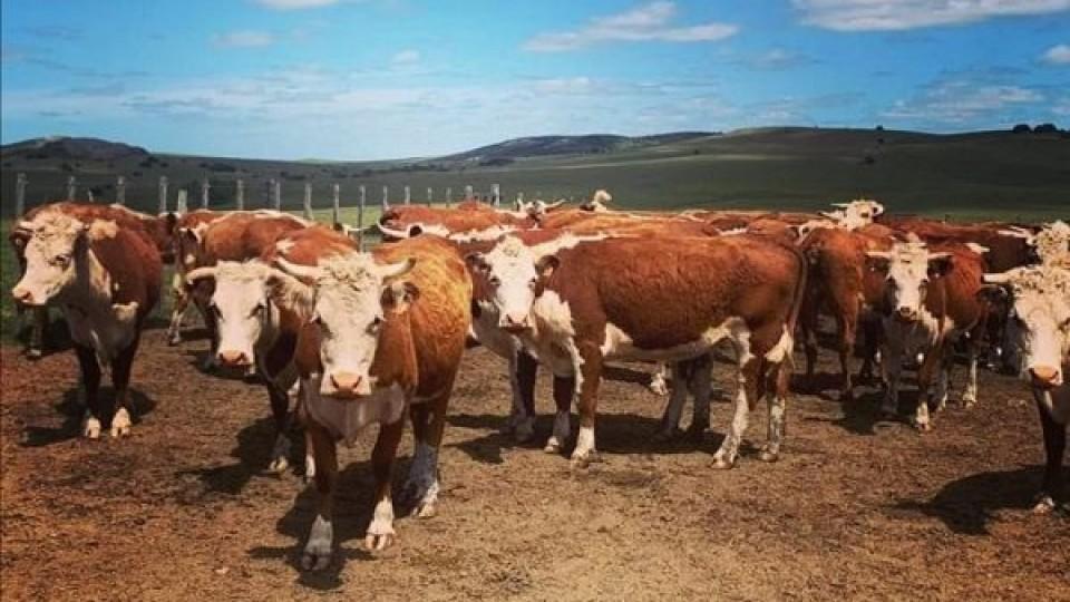 Pantalla Uruguay con el BSE oficializan ''Seguro de Vida'' para los ganados vendidos —  Inversión — Dinámica Rural | El Espectador 810