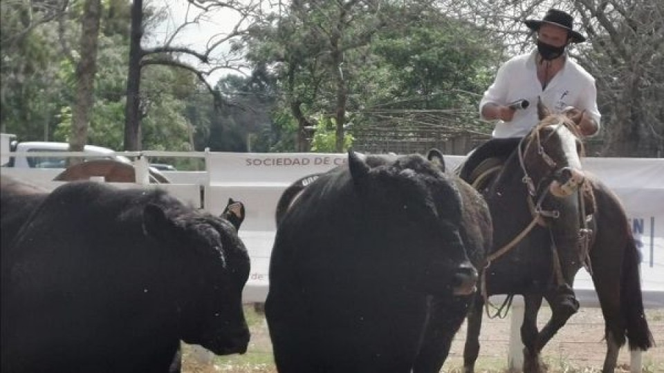 Zafra de toros: ''La inversión en genética no se vio afectada por el clima'' —  Ganadería — Dinámica Rural | El Espectador 810