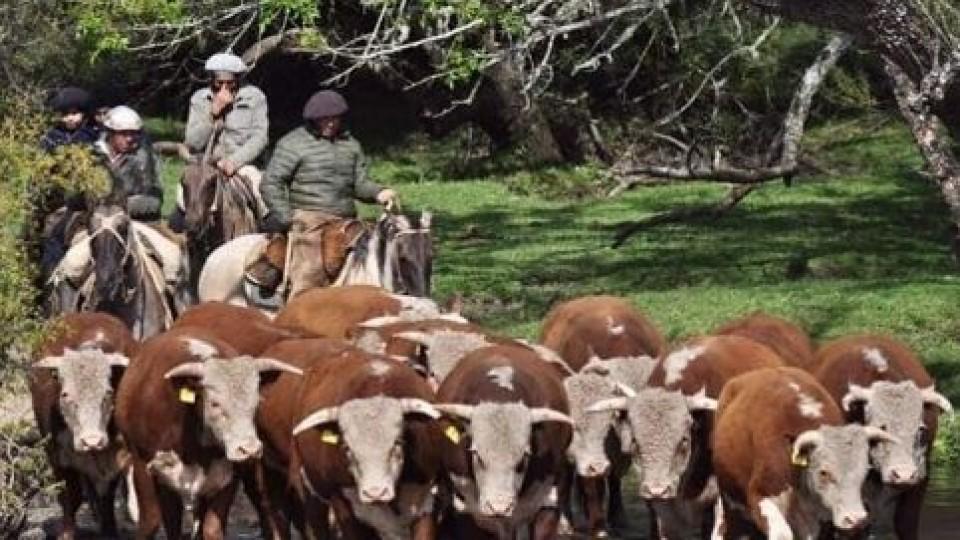 Durazno lideró la venta de genética en volumen y precios —  Ganadería — Dinámica Rural | El Espectador 810