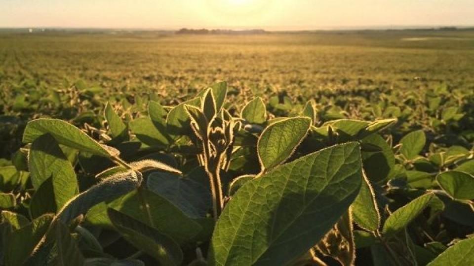 F. Arrosa: ''Este año la soja de 2da predominará el área 2020'' —  Agricultura — Dinámica Rural | El Espectador 810