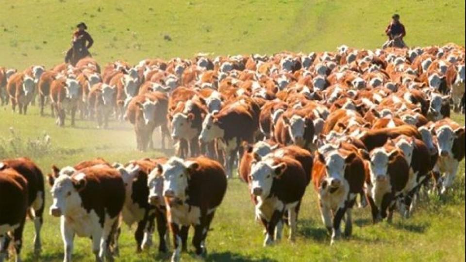 Los números de la ganadería: Una mirada productiva, económica y financiera —  Ganadería — Dinámica Rural | El Espectador 810