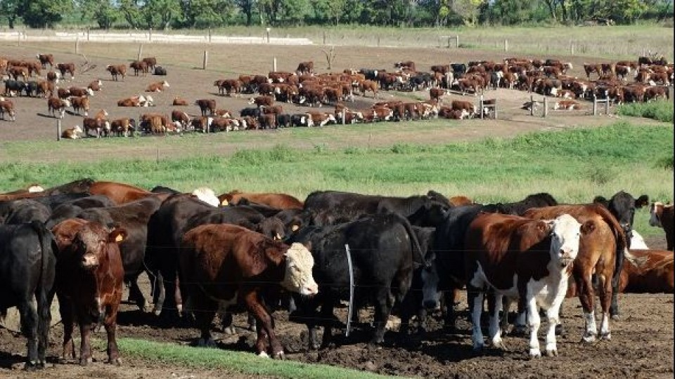 J. González: ''Hoy el clima condiciona tanto al ganadero como al industrial'' —  Mercados — Dinámica Rural | El Espectador 810