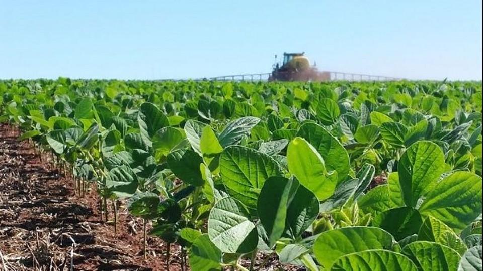 Soja: Las lluvias permitieron retomar la siembra —  Agricultura — Dinámica Rural | El Espectador 810