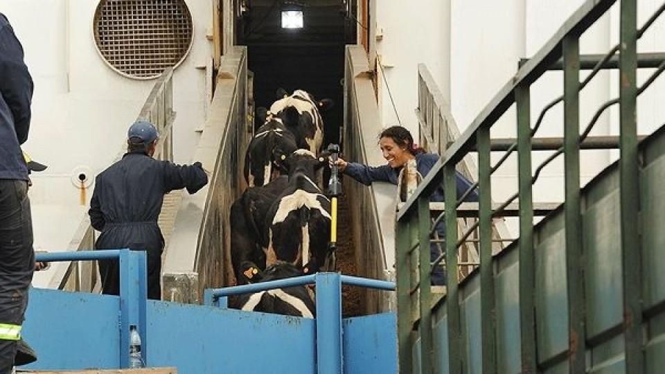 Partió a China contingente de ganado Holando y Hereford —  Economía — Dinámica Rural | El Espectador 810