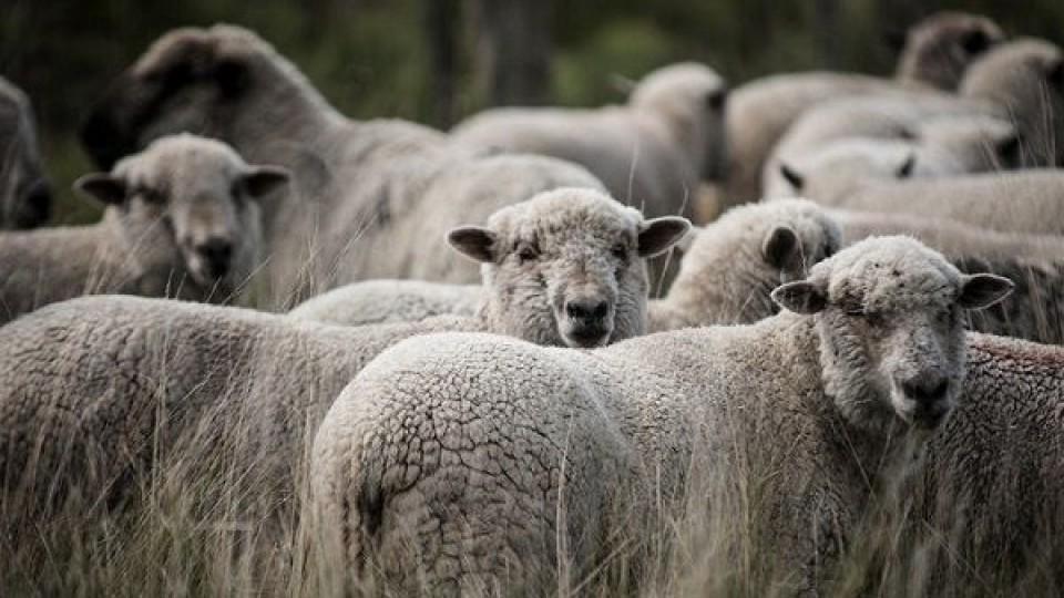 R. Volonté: ''El rubro ovino, a pesar de las adversidades, es competitivo'' —  Ganadería — Dinámica Rural | El Espectador 810