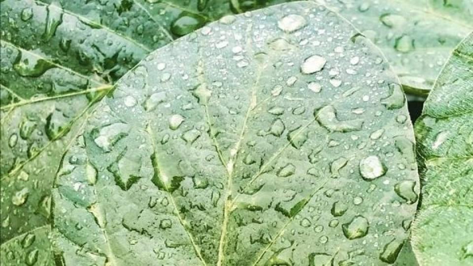 Soja: ''Las lluvias se traducen en las chacras con mejor estado productivo'' —  Agricultura — Dinámica Rural | El Espectador 810