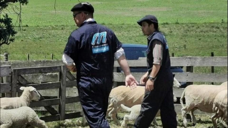 Encarnerada: Se recomienda revisar los carneros, priorizando en la calidad y no en la cantidad —  Ganadería — Dinámica Rural | El Espectador 810