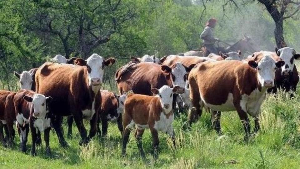 ¿Qué cosas hacer para que el ganado pos crisis climática logre buena condición corporal? —  Ganadería — Dinámica Rural | El Espectador 810