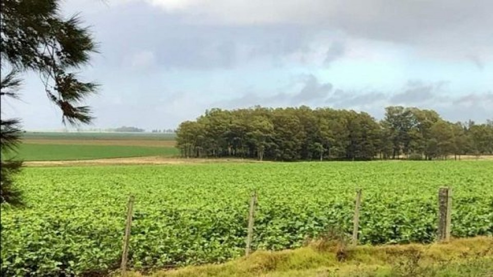 A. Alayón: ''Hoy las chacras proyectan mejores rindes'' —  Agricultura — Dinámica Rural   El Espectador 810