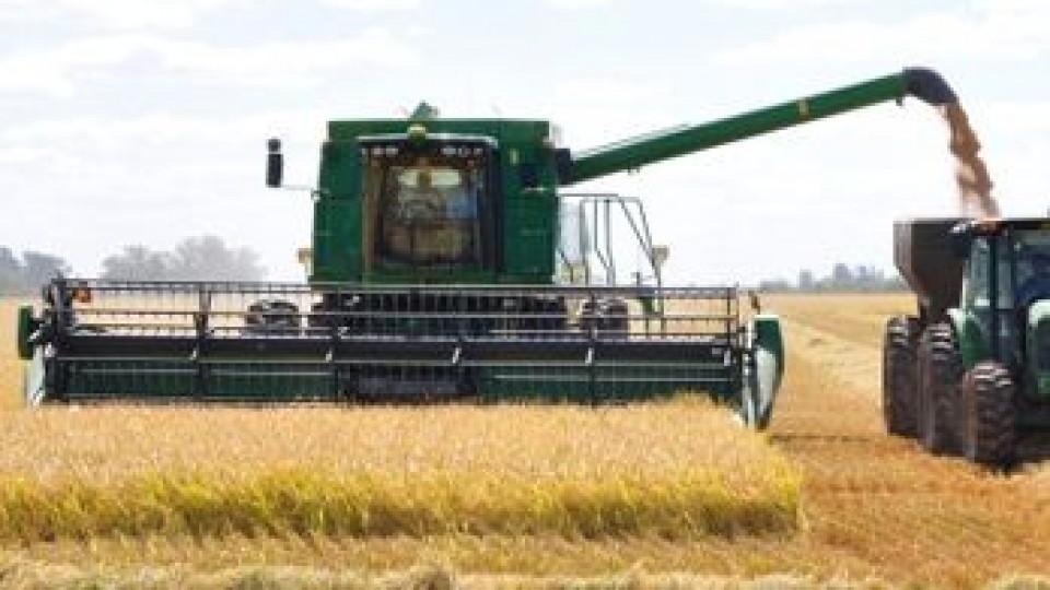 Arroz: El precio para la zafra 18/19 se ubicó en 9 dólares por bolsa de 50kgs —  Agricultura — Dinámica Rural   El Espectador 810
