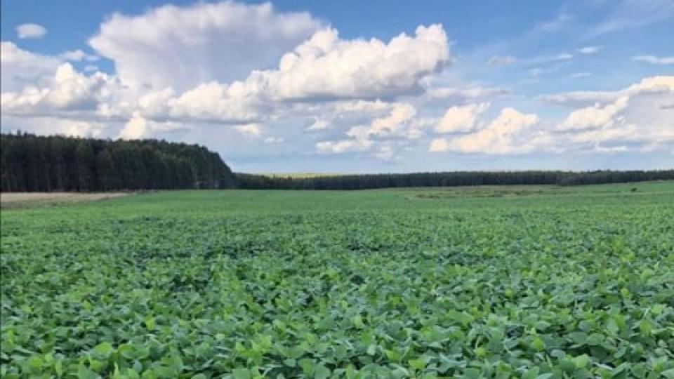 Soja: Donde no llovió lo suficiente, ''hay poco margen de manejo, pero se está a tiempo de revertir la situación'' —  Agricultura — Dinámica Rural | El Espectador 810