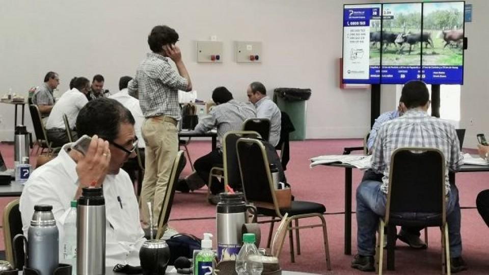 ''Un rematazo'', así se definió el remate 225 de Pantalla Uruguay —  Mercados — Dinámica Rural | El Espectador 810